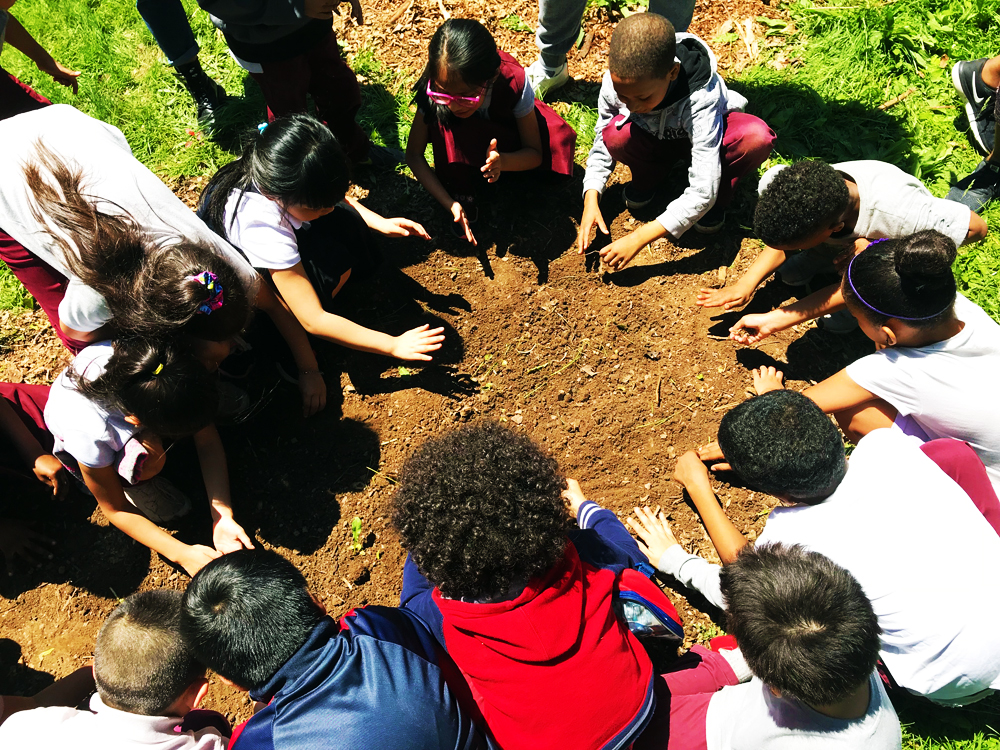 the first graders planting wild flower seeds